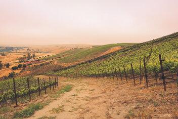 Rita's Crown vineyard